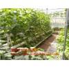 水培蔬菜定植篮 加深定植种植杯 温室无土栽培设备定做